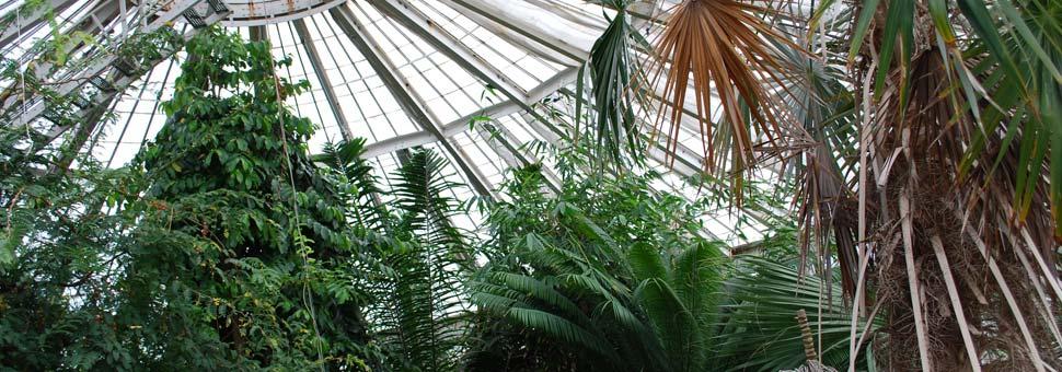 Botanical Gardens Copenhagen Free Attraction Reviews Com