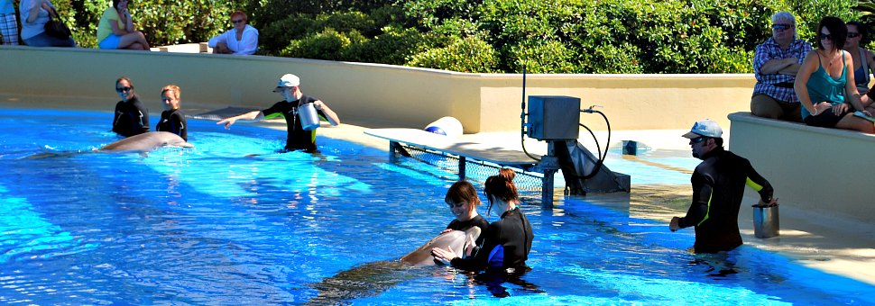 Dolphin Trainer For A Day, Las Vegas Mirage