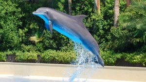 Dolphin Trainer For A Day, Mirage Hotel, Las Vegas